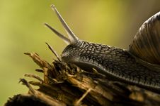 Free Snail Stock Images - 4819144