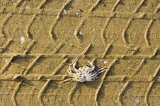 Free Crab Tracks 4x4  Evolution Royalty Free Stock Photography - 4819157