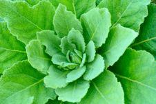 Free Spring Botanical Close-up Background Stock Images - 4819164