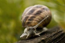 Free Snail Stock Photo - 4819190