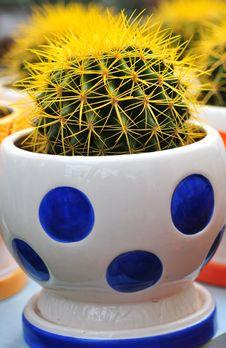 Free Cactus Bowl Royalty Free Stock Photography - 4819857