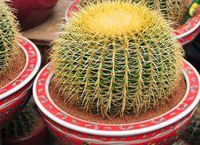 Free Cactus Royalty Free Stock Photo - 4819885