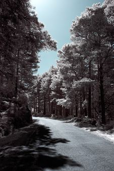 Free Infrared Forest Road Stock Image - 48138471