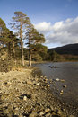 Free Trees Along A Lake Stock Photo - 4820820