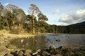 Free Trees Along A Lake Royalty Free Stock Photography - 4820847