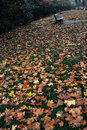Free Autumn Fall Leaves Stock Photos - 4825993