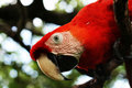Free Curious Macaw Stock Image - 4826711
