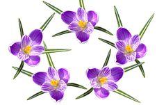Free Bright Flowers Stock Photo - 4820320