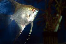 Free Fish Stock Photography - 4820942