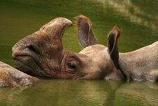 Free Rhino Stock Images - 4821284