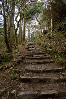 Free Stone Steps Under Trees Royalty Free Stock Photography - 4821337