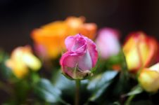Free Flowers For You Stock Photography - 4821412