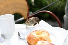 Free The Sparrow Attacks A Roll. Stock Images - 4822594