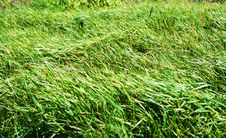 Free Rustle Of A Grass. Royalty Free Stock Photo - 4822905