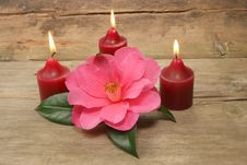 Free Three Candles And Camellia Royalty Free Stock Image - 4823176