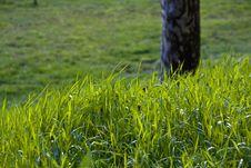Free Grass Stock Photo - 4824140