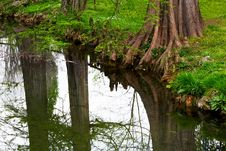 Free Trees Reflection Stock Photo - 4824510