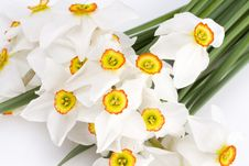 Free Delicate White Narcissus Stock Photography - 4824722