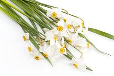 Free Delicate White Narcissus Stock Photos - 4824733