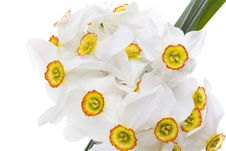 Free Delicate White Narcissus Stock Images - 4824764
