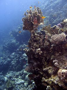 Free Coral Reef Scene Stock Photography - 4824782
