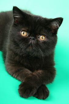 Free Cute Kitten Royalty Free Stock Photos - 4824818