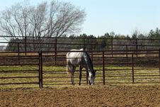 Free Horse In Paddock Royalty Free Stock Images - 4825609