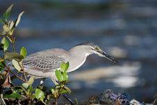 Free Acrossing Bird Stock Photo - 4825790