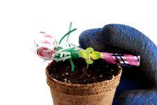 Free Celebrate Spring Royalty Free Stock Image - 4825796