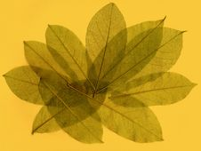 Free Abstract Leaves 2 Royalty Free Stock Photos - 4826368