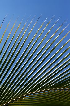 Free Palm Leaves Stock Photos - 4826863