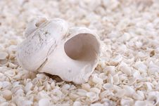 Free Seashell Stock Images - 4829054