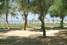 Tree Park Near Seaside Stock Photography