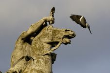 Free Horse Statue, Pigeons Flying Stock Image - 4829571