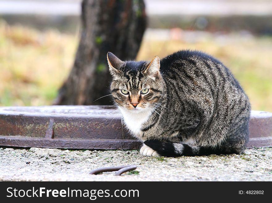 Lonely freezing cat.