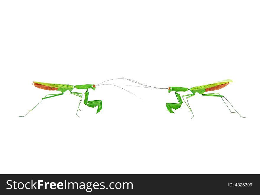Praying mantis vs praying mantis 1d