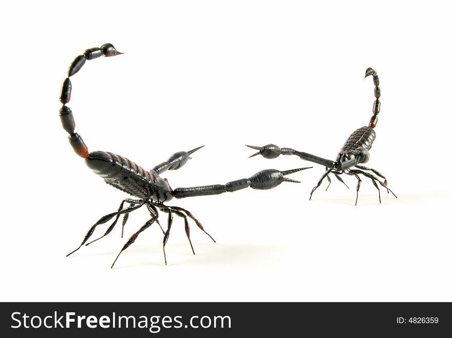 Scorpion Vs Scorpion - Free Stock Images & Photos - 4826359