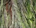 Free Bark Texture Royalty Free Stock Photo - 4834335