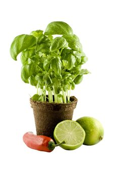 Free Basil, Lime & Chili Isolated On White Stock Images - 4830174
