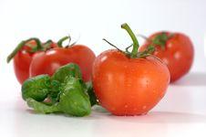 Free Tomatoes And Basil Royalty Free Stock Image - 4830436