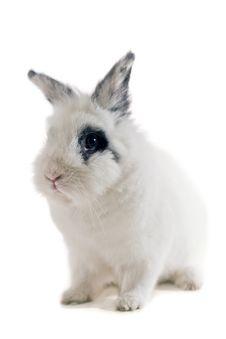 Free Small Rabbit Stock Photography - 4830442
