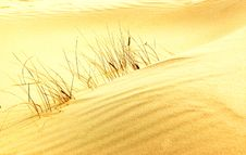Free Small Grass In Desert Stock Image - 4830831
