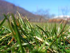 Free Grass Royalty Free Stock Images - 4830869