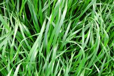 Grass Leaves Stock Photos