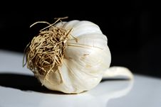 Free Garlic Bulb Royalty Free Stock Photography - 4831947