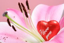 Free I Love You Stock Photography - 4832152