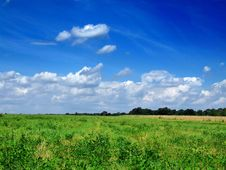 Free Green Grass On Blue Sky Royalty Free Stock Photos - 4832238