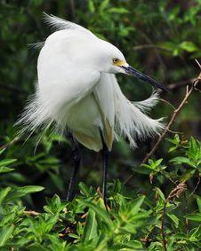 Free Turning The Head Of A Bird Stock Photo - 4833560