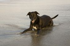 Free Dog Laying In Water At Beach Royalty Free Stock Photography - 4833937