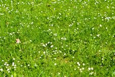 Free Field In Spring Royalty Free Stock Photo - 4834445